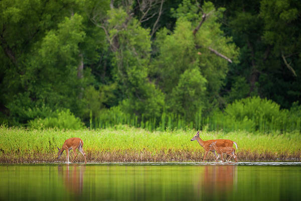 Photograph - Willows, Wildlife And Water by Jeff Phillippi