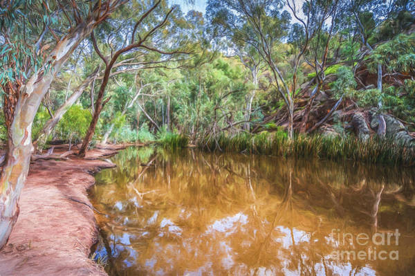 Photograph - Wilpena Billabong    Go6 by Ray Warren