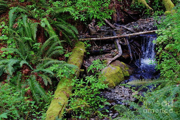Photograph - Wilson Creek #10 by Ben Upham III