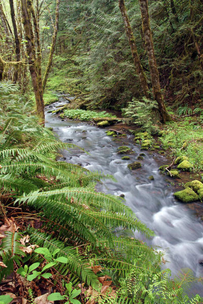 Photograph - Wilson Creek #21 by Ben Upham III