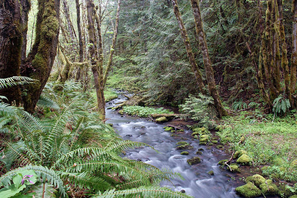 Photograph - Wilson Creek #22 by Ben Upham III