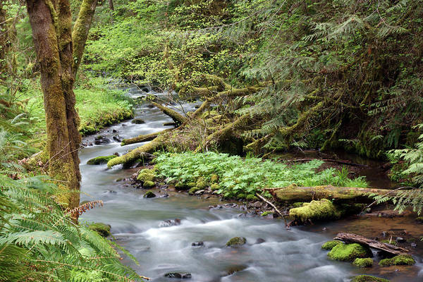 Photograph - Wilson Creek #24 by Ben Upham III