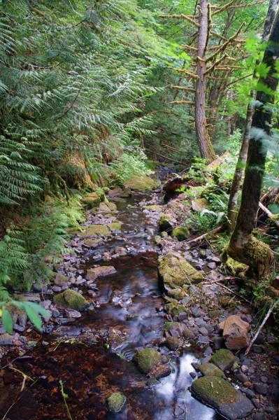 Photograph - Wilson Creek #6 by Ben Upham III
