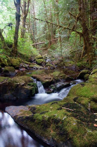 Photograph - Wilson Creek #8 by Ben Upham III