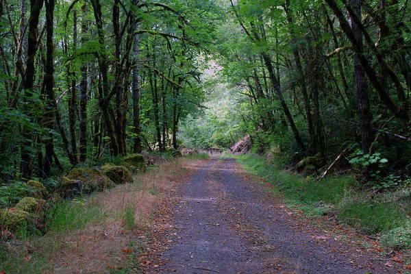 Photograph - Wilson Creek Road #1 by Ben Upham III