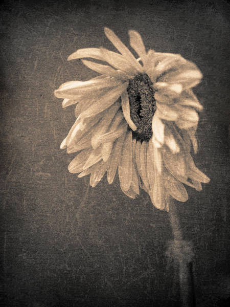 Photograph - Wilting In Colour by Tara Turner