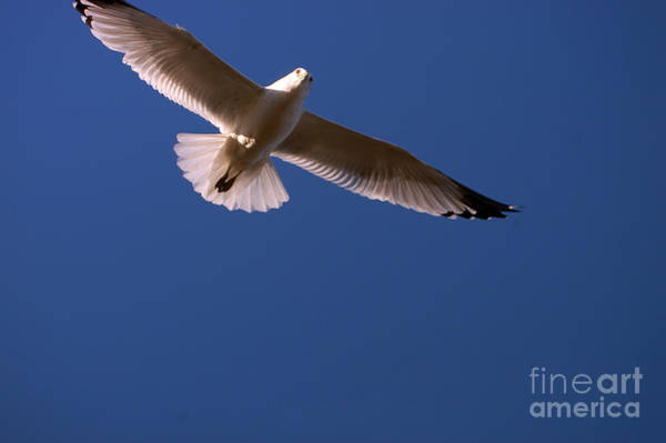 Photograph - Wind Beneath My Wings by Clayton Bruster