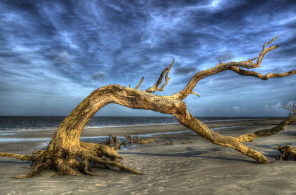 Barrier Photograph - Wind Bent Driftwood by Greg and Chrystal Mimbs
