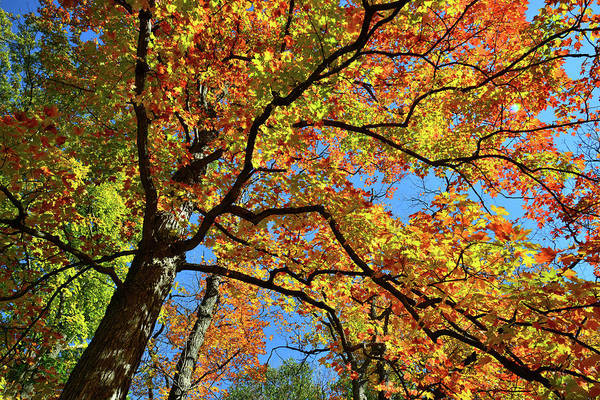 Photograph - Wind Blown Fall Colors In Cook County by Ray Mathis