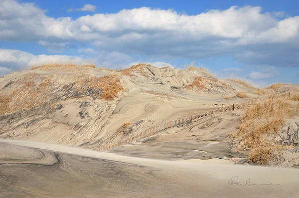 Photograph - Wind Blown - Pea Island 7464 by Dan Beauvais