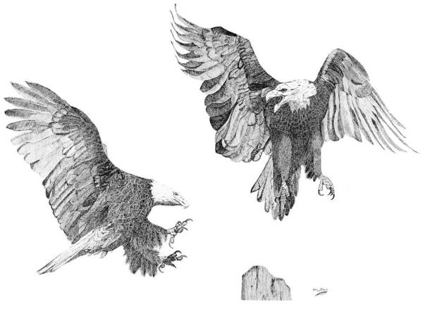 Baby Eagle Drawing - Wind Dancers by Eric Black