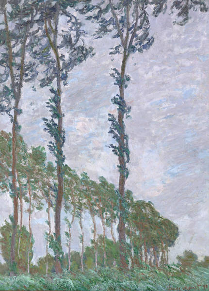 Painting - Wind Effect Series Of The Poplars by Claude Monet