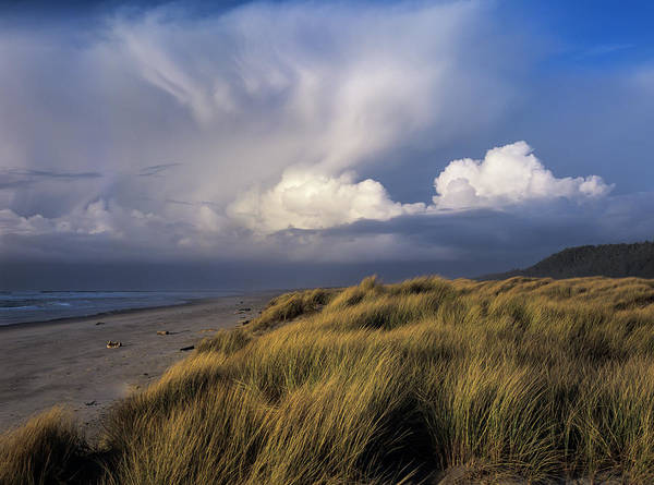 Photograph - Wind In The Grass by Robert Potts