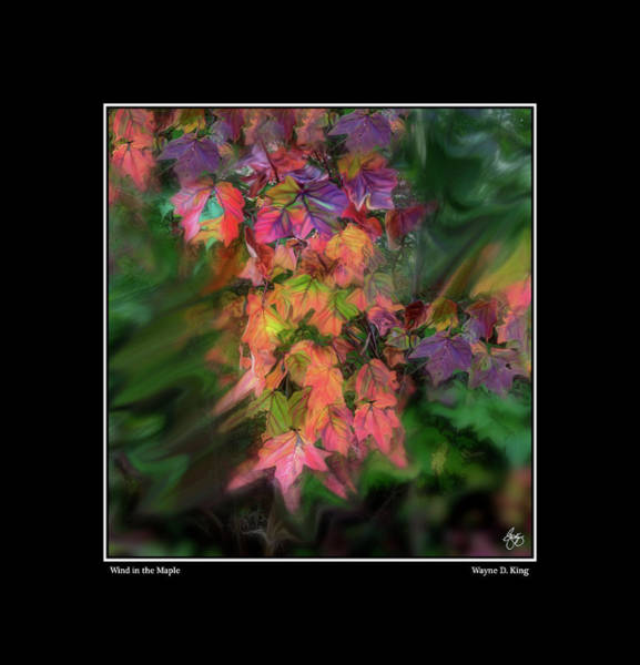 Photograph - Wind In The Maple Poster by Wayne King
