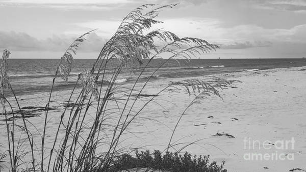 Photograph - Wind In The Sea Oats by Rachel Hannah