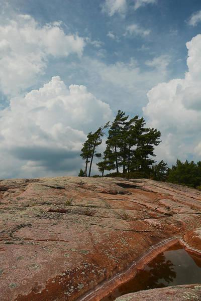 Wind Swept Trees On Rocks Art Print