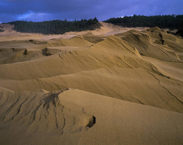 Photograph - Wind Works by Robert Potts