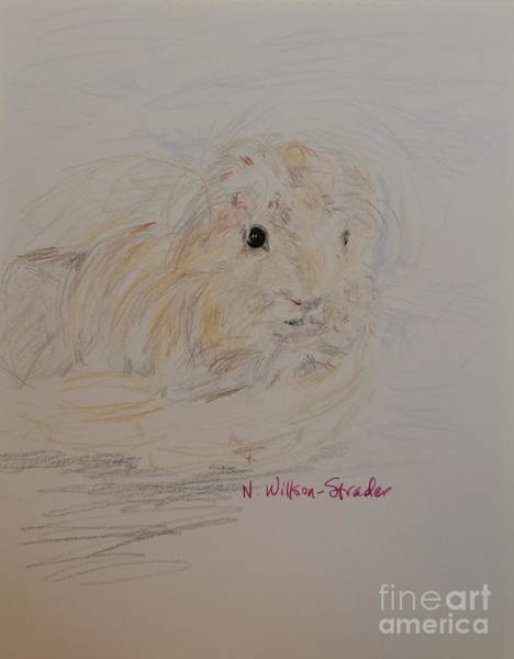 Furry Drawing - Windblown Guinea Pig by N Willson-Strader