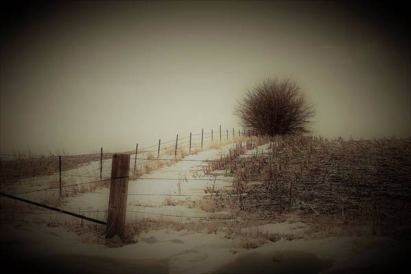 Wall Art - Photograph - Winder Fenceline by Toni Grote