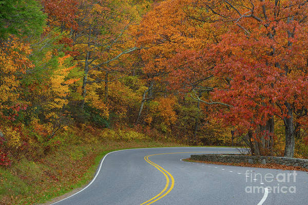 Shenandoah Wall Art - Photograph - Winding Road In Autumn  by Michael Ver Sprill