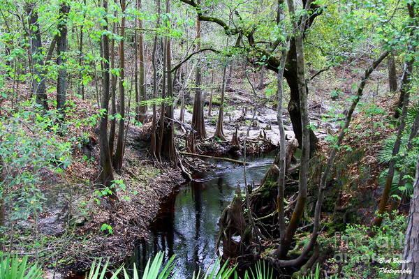 Photograph - Winding Sopchoppy River by Barbara Bowen