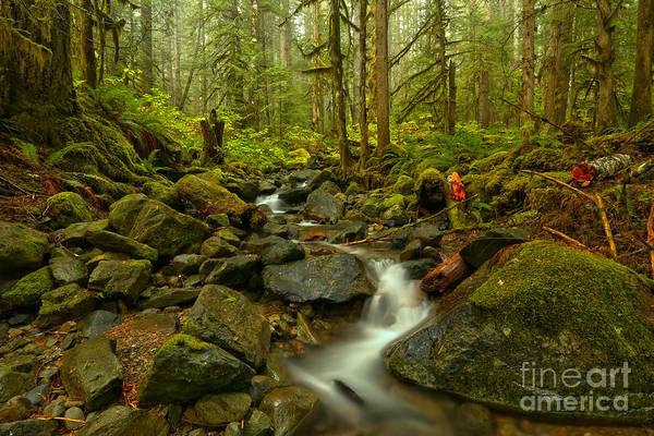 Photograph - Winding Through The Mt. Baker Rainforest by Adam Jewell
