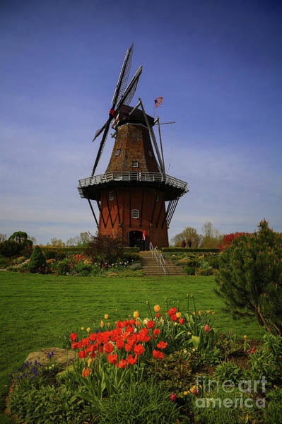Holland Mi Wall Art - Photograph - Windmill At Tulip Time by Rachel Cohen