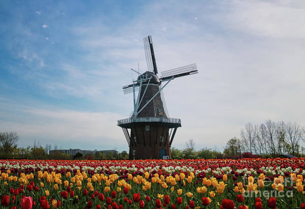 Photograph - Windmill De Zwaan by Rachel Cohen