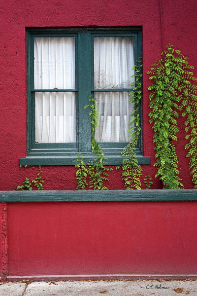 Photograph - Window And Vines by Christopher Holmes