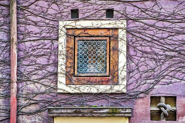 Window And Vines - Prague Art Print