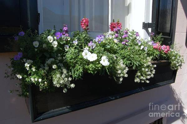 Photograph - Window Box by Donna Bentley