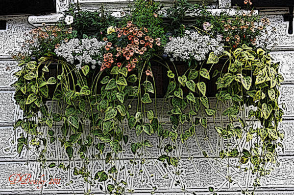 Photograph - Window Box Flowers by Donna Bentley