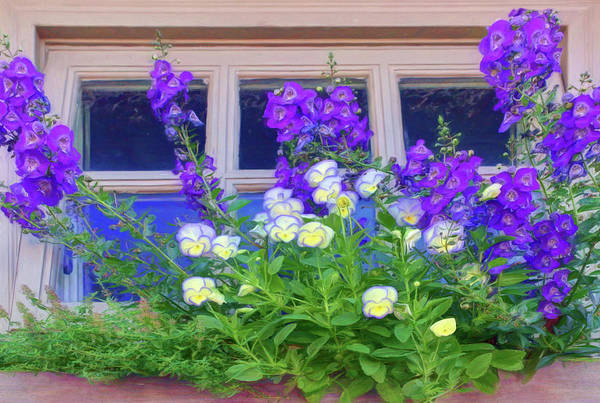 Wall Art - Photograph - Window Box With Pansies by Nikolyn McDonald