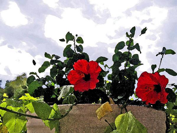 Digital Art - Window Flowers by James Granberry