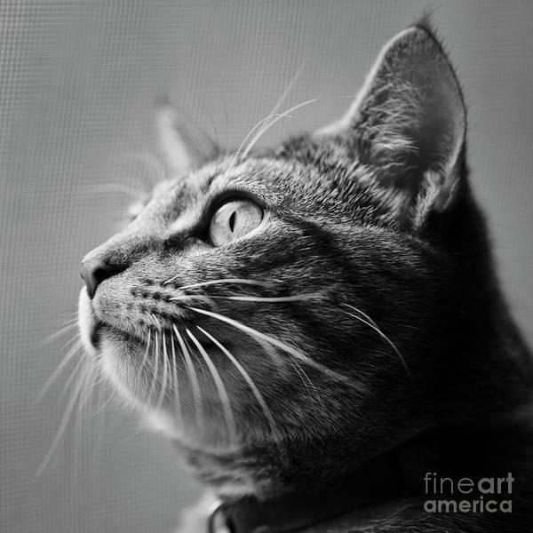 Photograph - Window Kitten by Patrick M Lynch