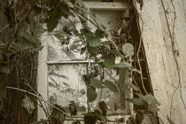 Photograph - Window Less by Sharon Popek