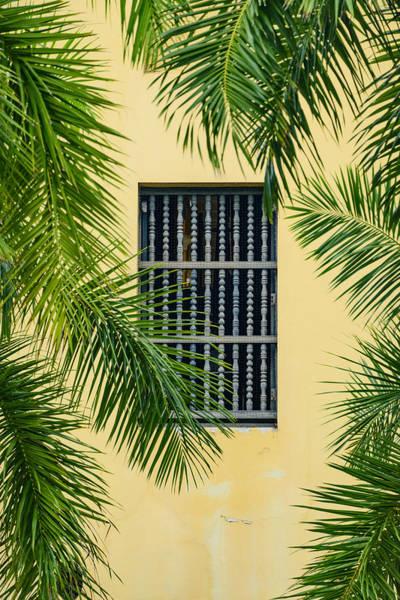 Wall Art - Photograph - Window With Palm Leaves by Oscar Gutierrez