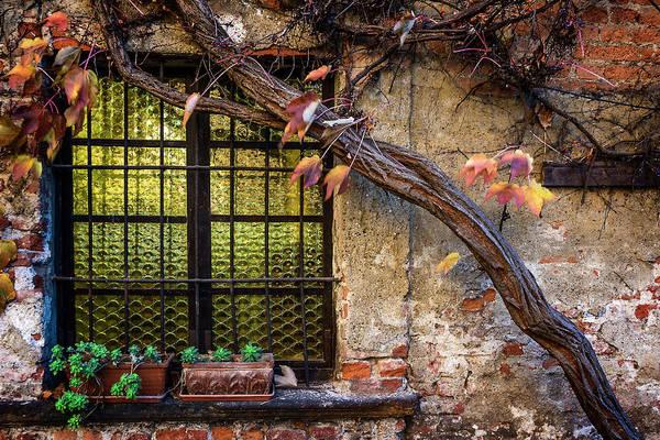 Photograph - Window With Woodbine by Roberto Pagani