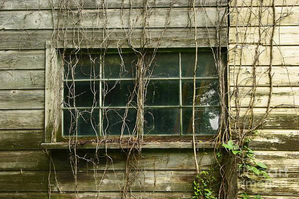 Wall Art - Photograph - Window by Zal Latzkovich