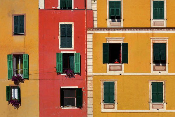Photograph - Windows by Marji Lang