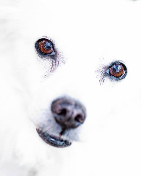 Dog Lover Photograph - Windows To The Soul by Lara Ellis