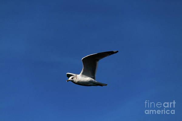 Photograph - Windsurfer by William Norton