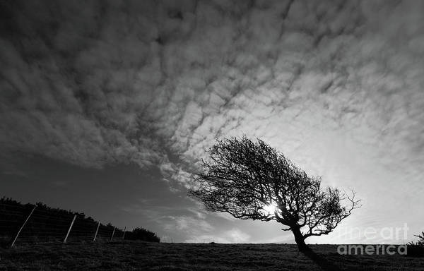 Photograph - Windswept Blackthorn Tree In Winter by James Brunker