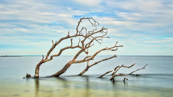 Photograph - Windswept Branches On Sandy Hook Bay by Gary Slawsky