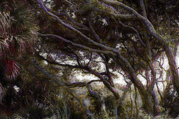 Photograph - Windswept Forest by Donna Bentley