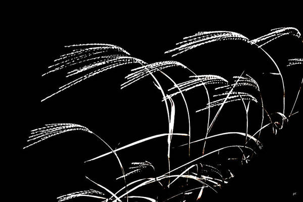 Windswept Grasses Art Print