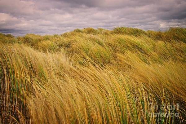 Photograph - windswept Grasses by Martyn Arnold
