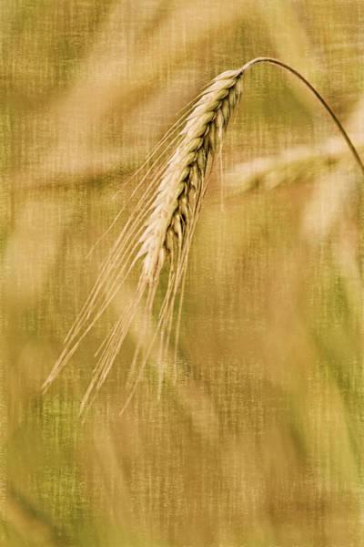 Photograph - Windswept I by Leda Robertson