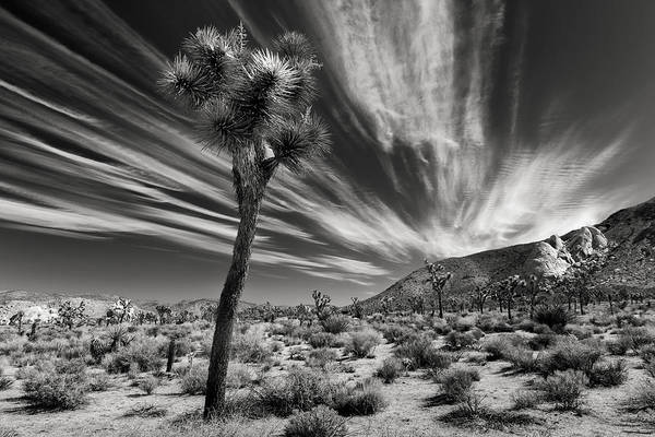 Mojave Photograph - Windswept by Joseph Smith