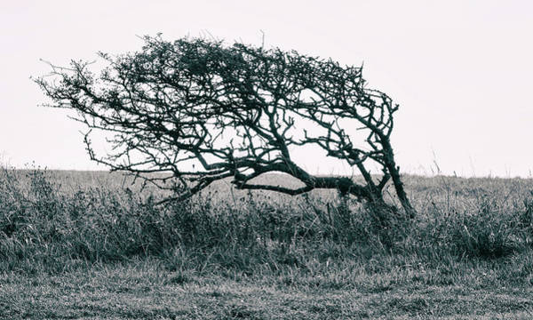 Windswept Photograph - Windswept by Martin Newman